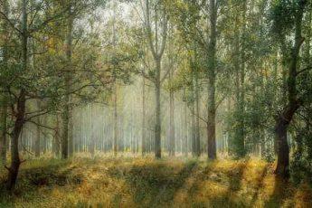 лес, деревья, флора, растения, биом, солнечный свет, трава, природа, пейзаж