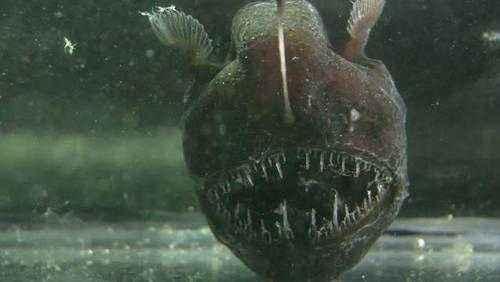 Что такое глубоководный океанический жёлоб? 5