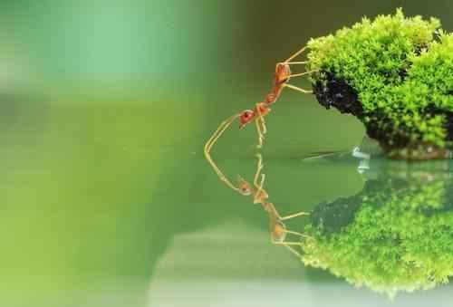 Самые интересные факты про муравьев 9