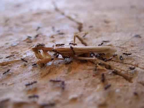 Самые интересные факты про муравьев 4