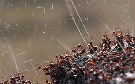 Самые интересные факты про муравьев 13