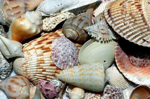 Класс гастроподы: описание, типы, особенности и фото брюхоногих моллюсков 2