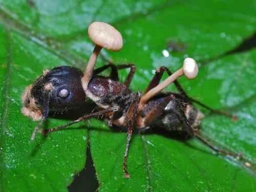 Самые интересные факты про муравьев 7