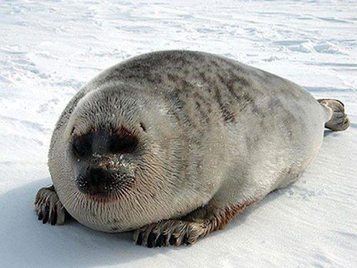 Животные, находящиеся под угрозой исчезновения из-за изменения климата 3