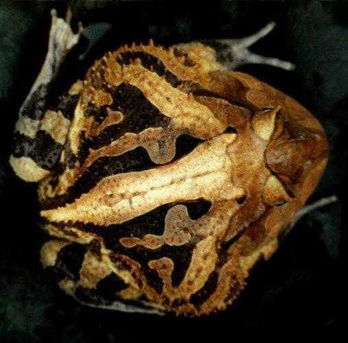 Животные, которые маскируются под листья растений 6
