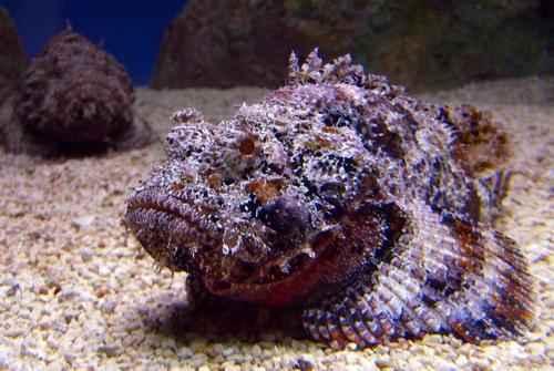 Самые ядовитые животные планеты Земля - список, фото и характеристика 5
