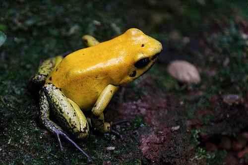 Самые ядовитые животные планеты Земля - список, фото и характеристика 2