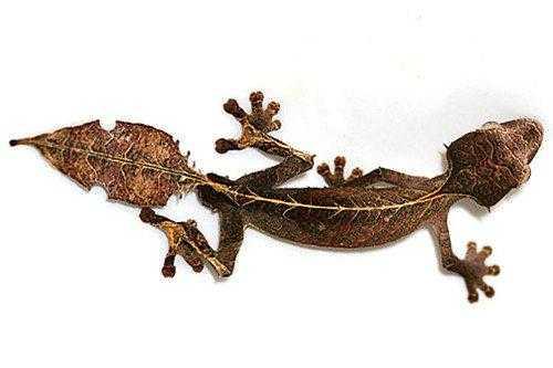 Эндемичные и редкие животные острова Мадагаскар 6
