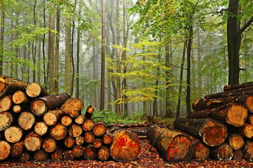 Реферат на тему рациональное использование лесных экосистем 8400
