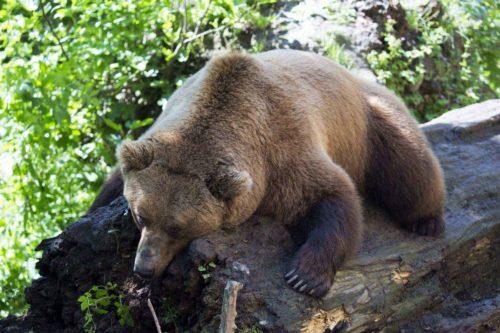 Какие животные впадают в спячку зимой? Список, характеристика и фото 13