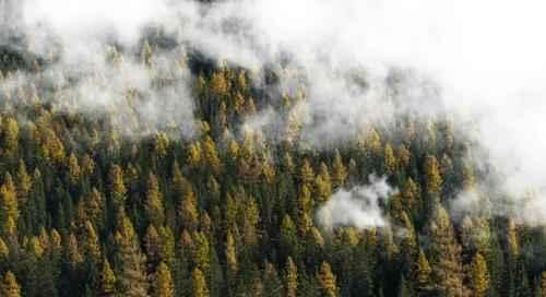 Лесные ресурсы Земли 3
