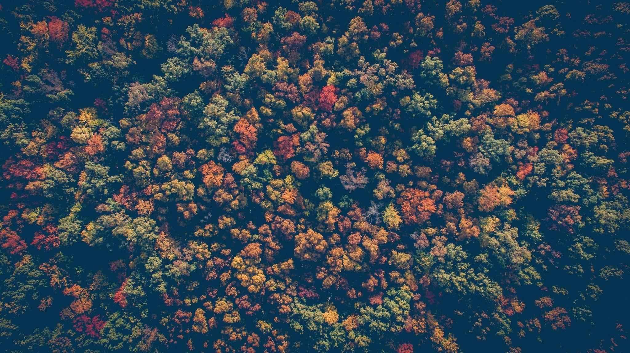 лес, осень, деревья, природа, флора, пейзаж, цвета, краски, высота, сверху