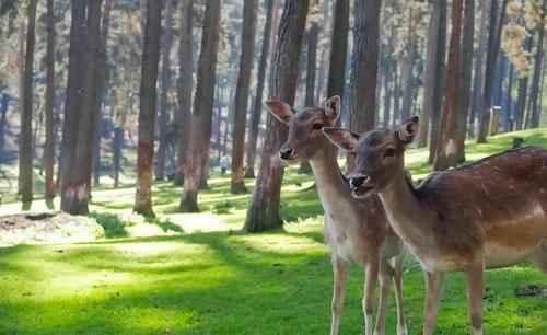 Лесное природное сообщество: особенности, значение для человека, флора и фауна 3