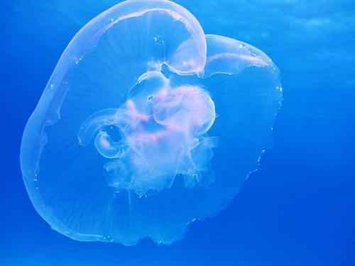 Интересные факты про медуз 4