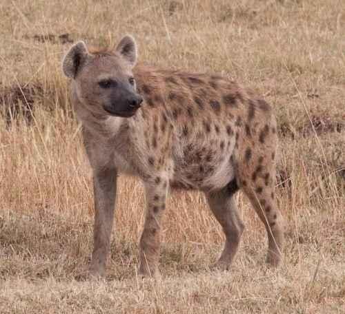 Самые странные и невероятные факты о животных 2