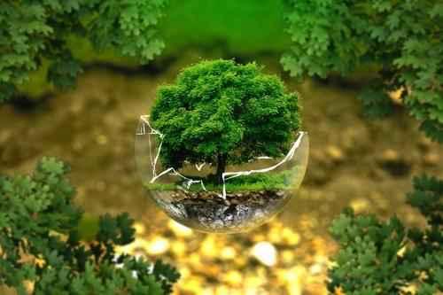 Лесное природное сообщество: особенности, значение для человека, флора и фауна 7
