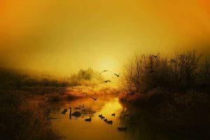 птицы, река, утки, лебедь, осень, рассвет, восход солнца, новый день, полет, природа