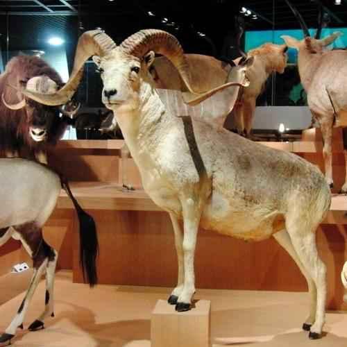 Какие животные обитают в Казахстане? 4