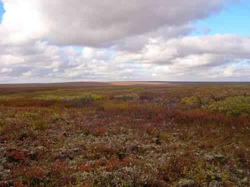 Описание и особенности природной зоны тундры 2