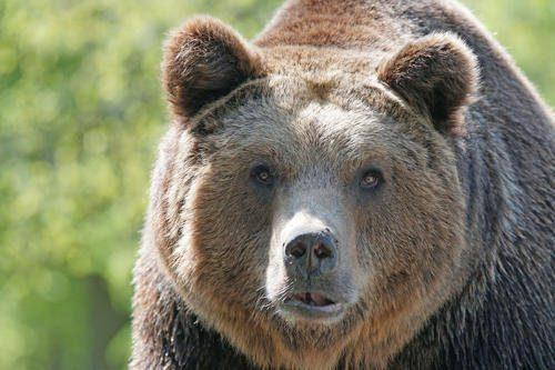 Животный мир Байкала — список, характеристика и фото