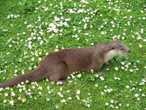 Животный мир России - список, виды, названия, описание и фото 4