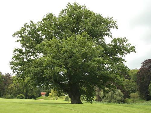 Животный и растительный мир лесостепи - характеристика, список, названия и фото 15