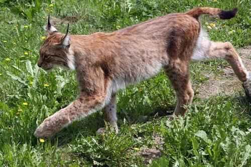 Животный мир России - список, виды, названия, описание и фото 8