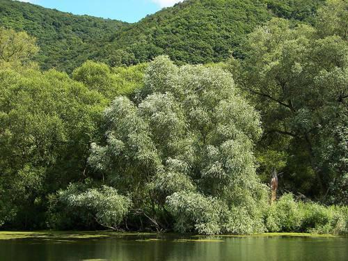 Растения России - деревья, кустарники, травы и другая флора страны 9