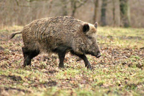 Каково значение животных в природе и жизни человека? 20 примеров, почему животные важны 16