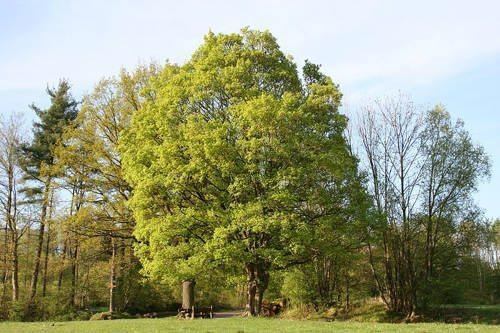 Растения России - деревья, кустарники, травы и другая флора страны 10