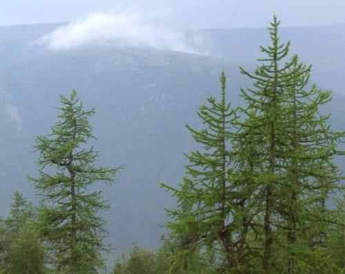 Растения России - деревья, кустарники, травы и другая флора страны 11