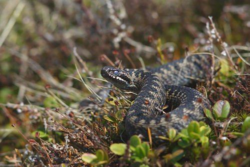 Флора и фауна болота - Какие животные обитают на болоте? 3