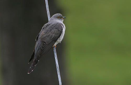 Птицы средней полосы России - список, характеристика и фото 12