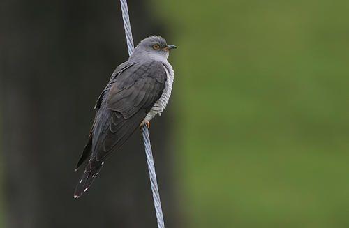 Отряды класса птиц - список, названия, фото и краткое описание 14