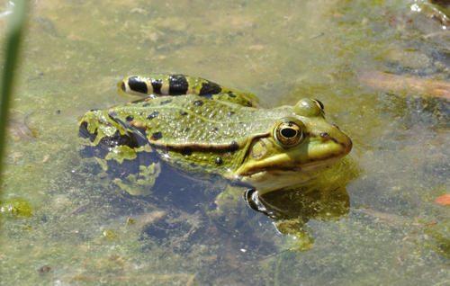 Животный мир России - список, виды, названия, описание и фото 40