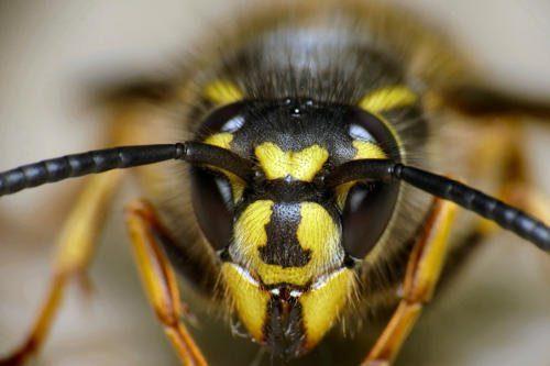 Какие насекомые смертельно опасные для человека - список, фото и описания 14