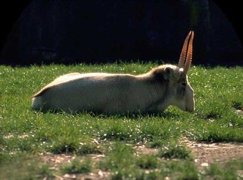 Какие животные обитают в степной зоне