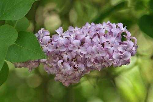 Растения России - деревья, кустарники, травы и другая флора страны 20