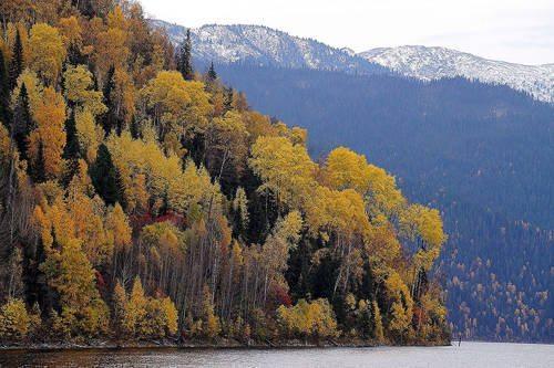 Растения России - деревья, кустарники, травы и другая флора страны 3