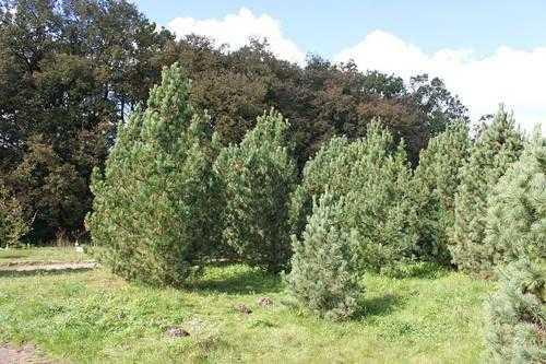Растения России - деревья, кустарники, травы и другая флора страны 15