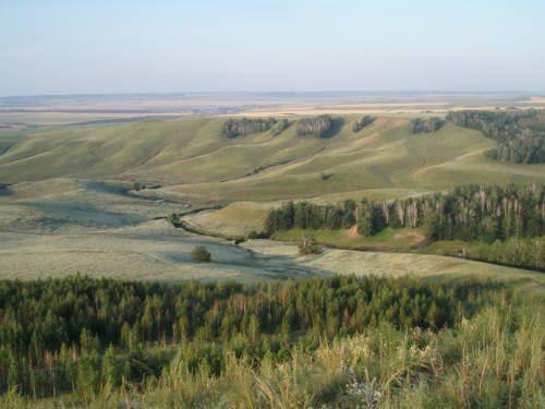 Растения России - деревья, кустарники, травы и другая флора страны 4