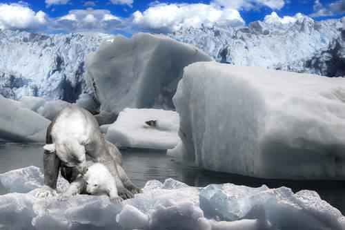 Описание и особенности природной зоны арктических пустынь 7