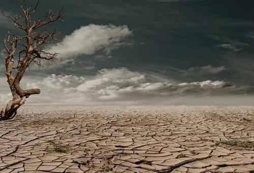 Зона пустынь и полупустынь России: где находится, карта, климат, флора и фауна 7