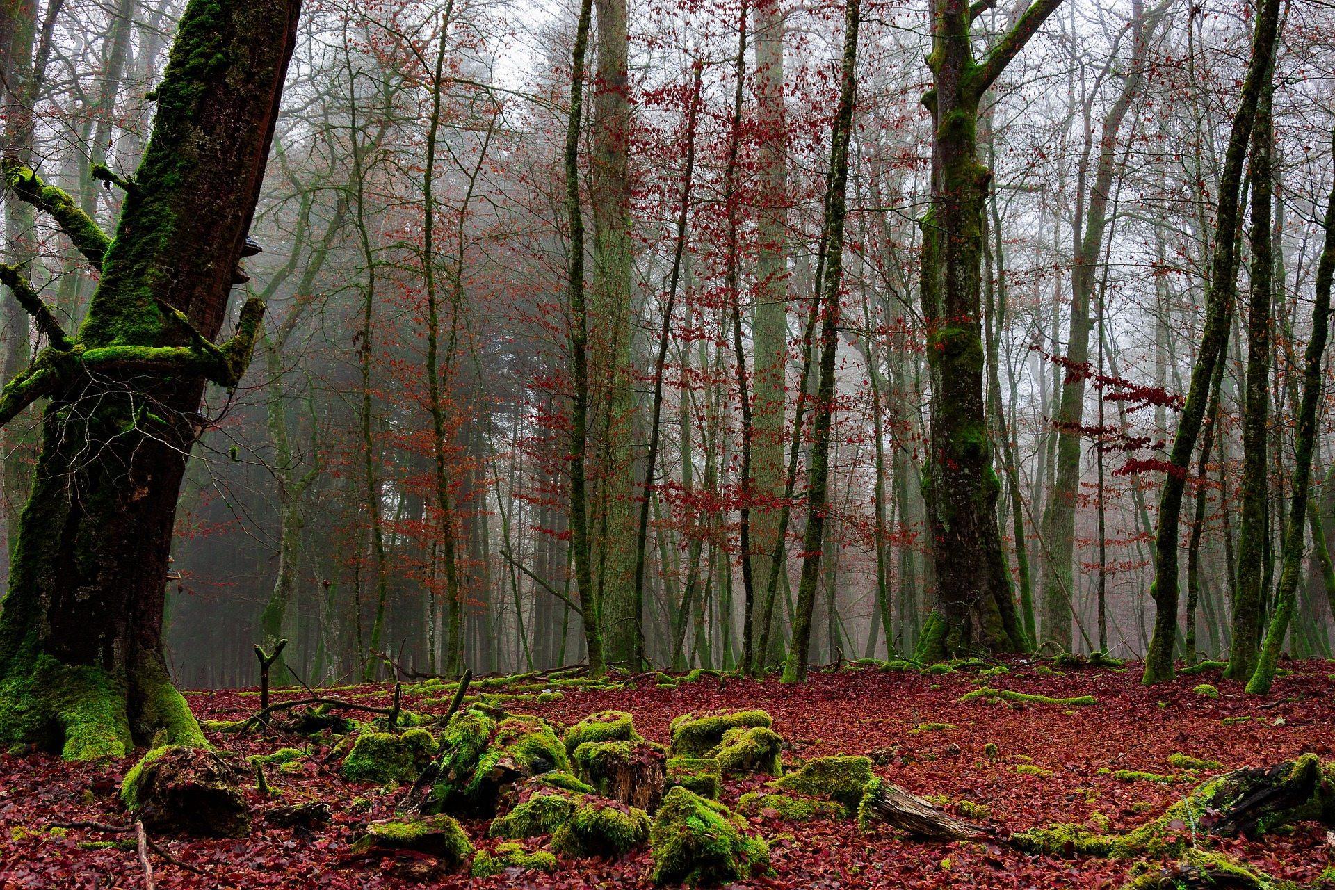 лес, мох, осень, деревья, холод, туман, пасмурно, сыро