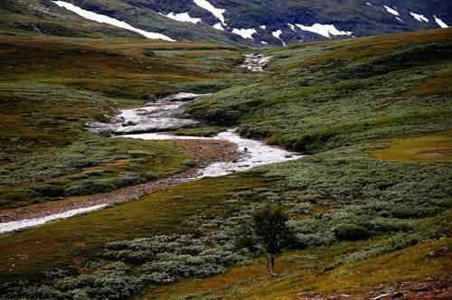 Описание и особенности природной зоны тундры 9