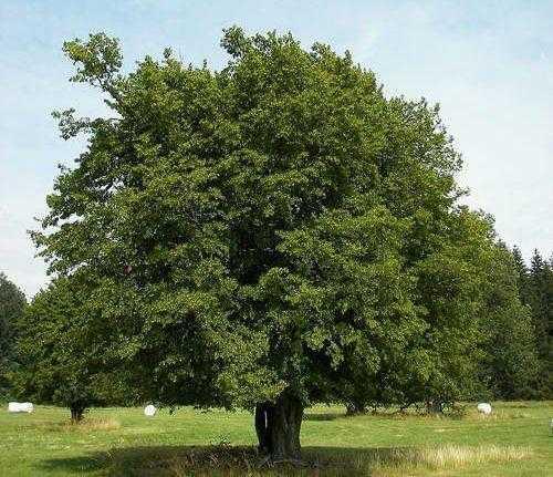 Животный и растительный мир лесостепи - характеристика, список, названия и фото 14