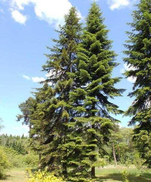Растительный мир Новосибирской области - список, характеристика и фото 3