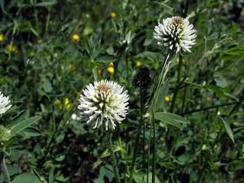 Животный и растительный мир лесостепи - характеристика, список, названия и фото 19