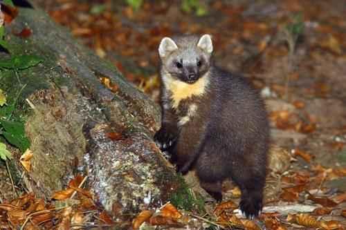 Животный и растительный мир лесостепи - характеристика, список, названия и фото 7