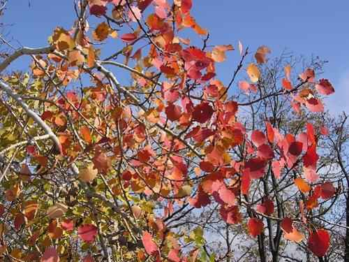 Животный и растительный мир лесостепи - характеристика, список, названия и фото 16